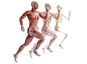 löpning bygga muskler
